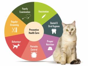 franksville preventive vet care, preventive veterinary care franksville, veterinary preventive care franksville