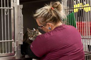 veterinary surgery, franksville veterinary clinic, veterinarian in franksville