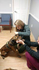 wellness focused veterinarian, veterinarian in franksville, franksville veterinary clinic
